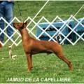 JAMBO DE LA CAPELLIERE