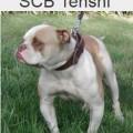 SCB TENSHI