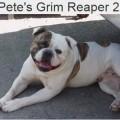 PETE'S GRIM REAPER 2