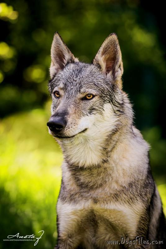 http://www.dogsfiles.com/mkportal/modules/dogsbase/albums/330/53305/foto54023.jpg