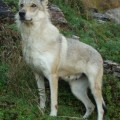 KAY -COLLE DEL LUPO-
