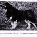 BALDO VON RUCKERTSHEIM