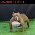 CANABDERA JADEE