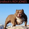 GRIDLOCK'S ROY JONES