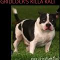 GRIDLOCK'S KILLA KALI