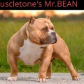 MUSCLETONE'S MR.BEAN