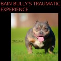 BAIN BULLY'S TRAUMATIC EXPERIENCE