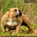 MUSCLETONE'S MAGOO DNA PP