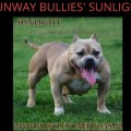 RUNWAY BULLIES' SUNLIGHT