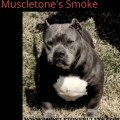 MUSCLETONE'S SMOKE