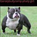 GERSEYBULLYCAMP PHATY GIRL