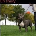 CH SHURY