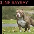 DAXLINE RAYRAY