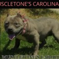 MUSCLETONE'S CAROLINA