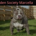 HIDDEN SOCIETY MARCELLA