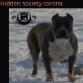 HIDDEN SOCIETY CORONA