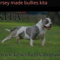 JERSEY MADE BULLIES KITA