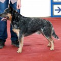 VAYDEE JAZZ BASS