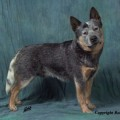 HEELERSRIDGE EMUBLU KING