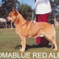 COOMABLUE RED ALERT