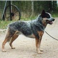 WINDWARRIOR'S BLUE DRAGON