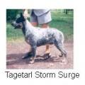 TAGETARL STORM SURGE