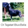 TAGETARL BLUE BELLA