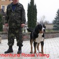 SENNENHUND ROSSII VIKING