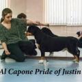 AL CAPONE PRIDE OF JUSTIN
