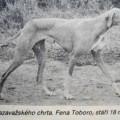 TOBORO II