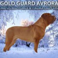 GOLD GUARD AVRORA