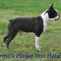 TIRINA'S PLANET VAN HELSING
