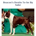 BEACON'S DESTIN TO-BE BY SABE