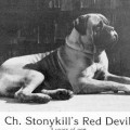 STONYKILL'S RED DEVIL DUNNIT