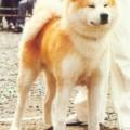 TOCHI MARU GO MIKE KENSHA